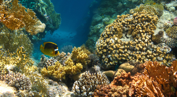underwater, world., coral, fishes, of, red - 28360232