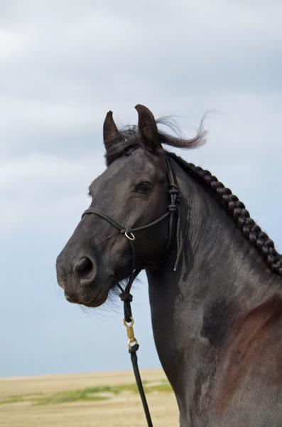 horse, at, the, beach - 28361068