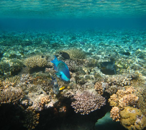 underwater, world., coral, fishes, of, red - 28361479