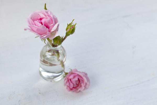 delicate pink roses in vase