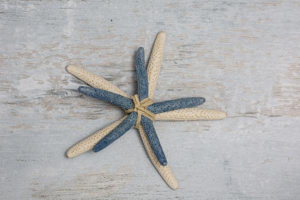 bundle of two starfish on wood