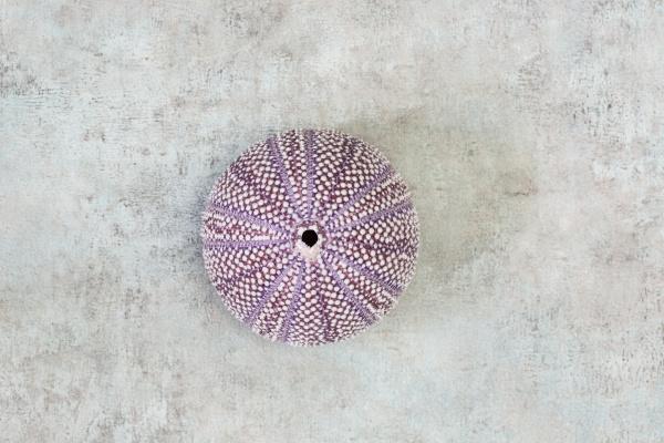 sea urchin shell flat lay