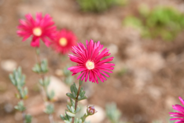 spring flowers at the costa blanca