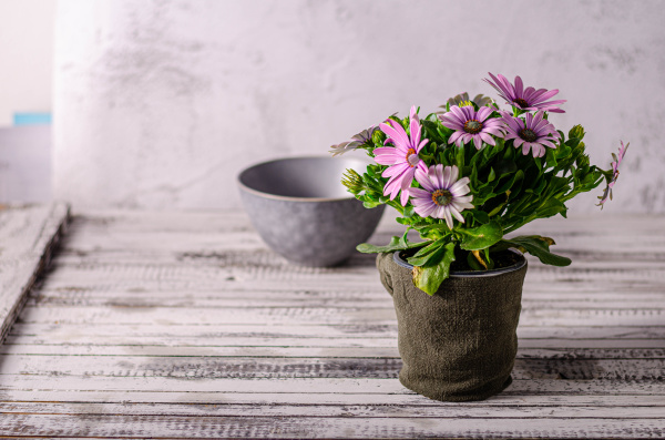 still life with beauty flower