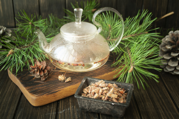 medicinal decoction with pine buds in