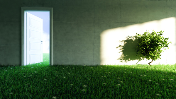 concrete wall with grass and flower