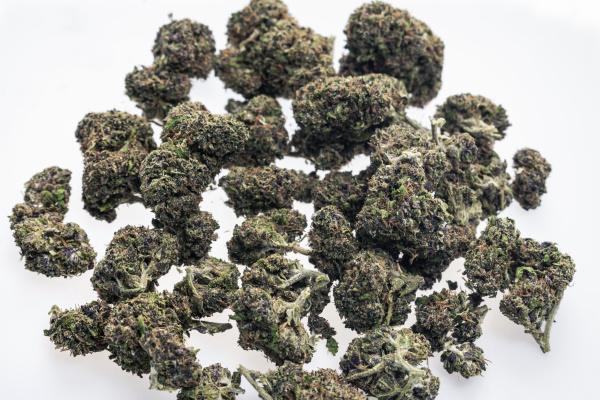 medical marijuana cannabis buds closeup on