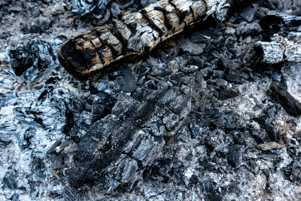 charred wood and ash in closeup