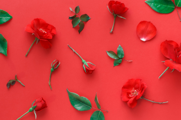 red roses on red background top