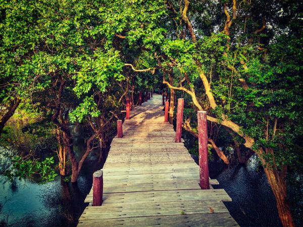 wooden bridge in flooded rain forest