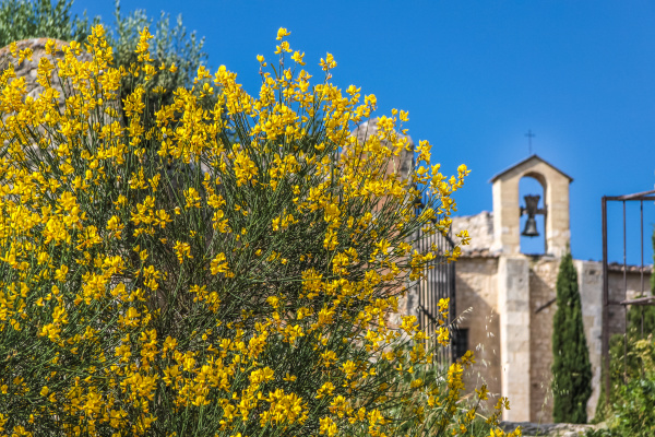flowering gorse and small chapel in
