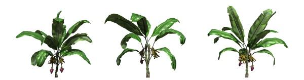 set of banana plants isolated