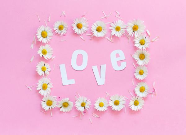 rectangular daisies frame on a pink