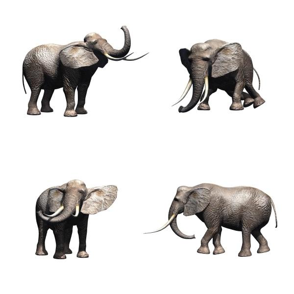 set of elephant isolated on