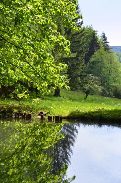 fish pond in the beautiful rhoen
