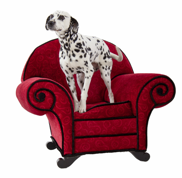 dalmatian on red chair