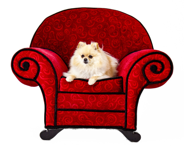 pomeranian on red chair