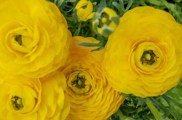 vibrant flowers closeup