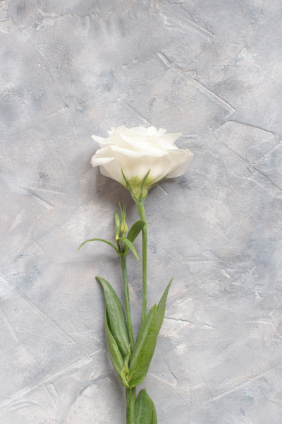 white flower on a grey background