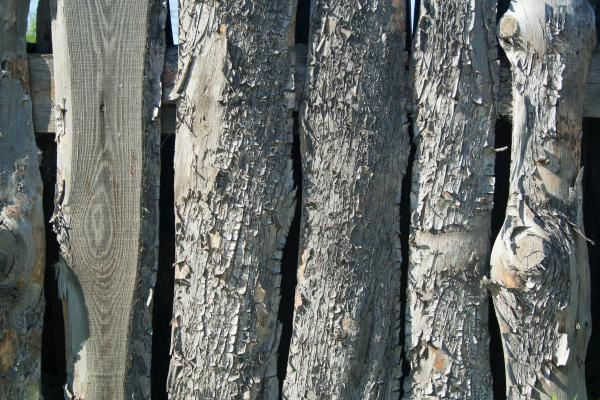 rough pine texture
