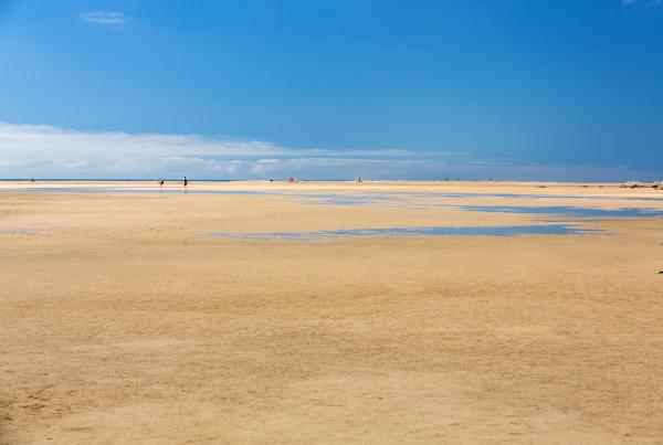 beach playa de sotavento canary island