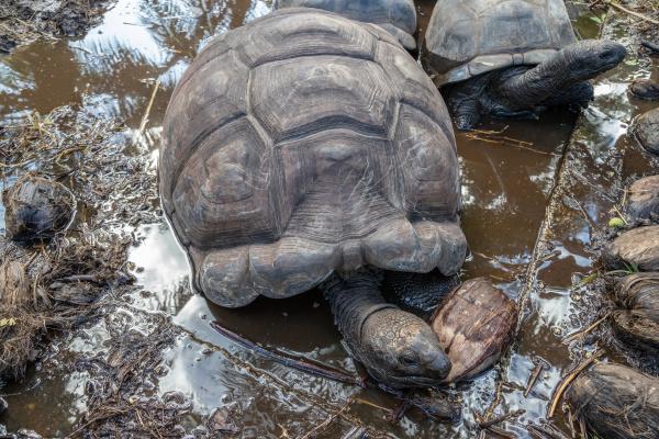 turtles on seychelles island praslin