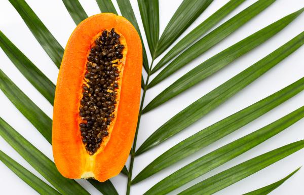 sweet ripe papaya on tropical palm