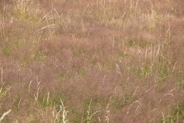 heather landscape with grasses and individual