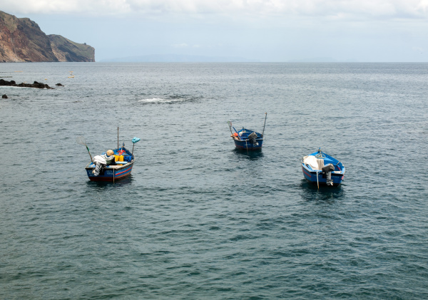 fishing boats in funchal madeira