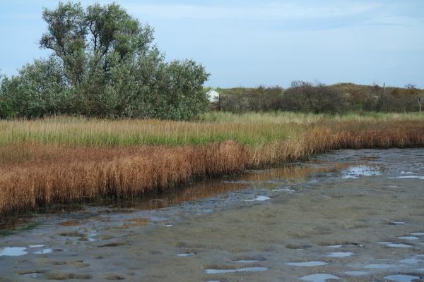nature protection area graswarder heiligenhafen