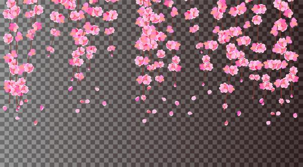 sakura cherry branches with delicate