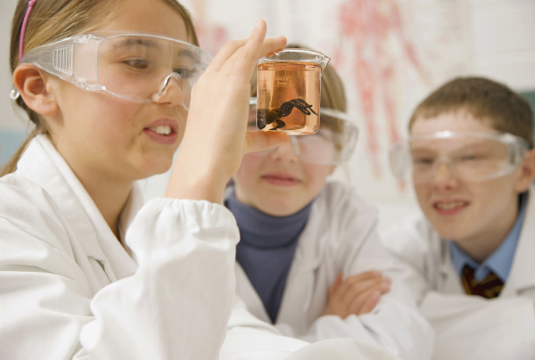 curious junior high school students examining