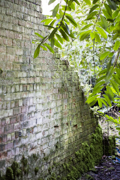 view along old brick wall overgrown