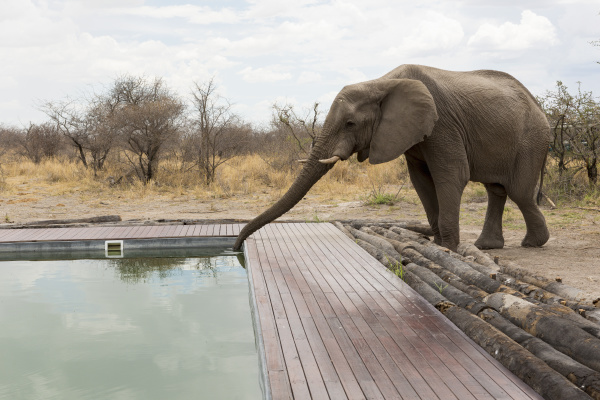 an elephant drinking with its trunk
