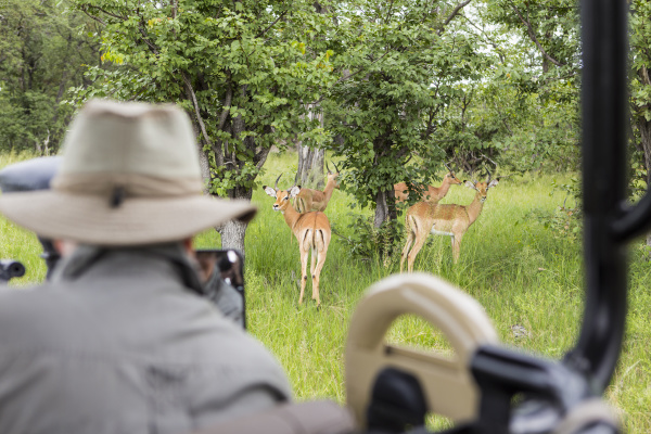 a safari guide looking at impala