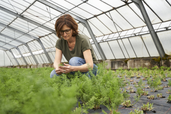woman cultivating herbs in greenhouse
