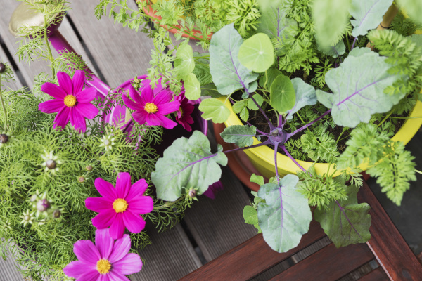 flowers and vegetables growing on balcony