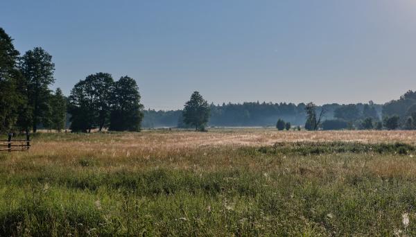 summertime morning in meadow