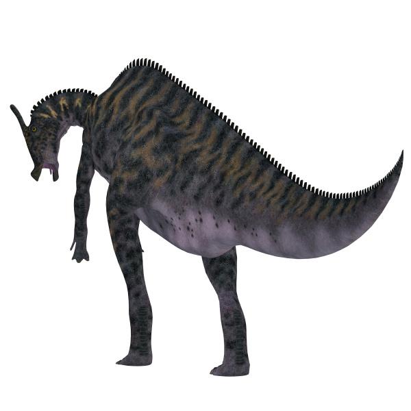saurolophus dinosaur tail