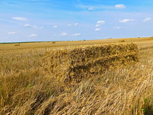 grain cultivation in the uckermark