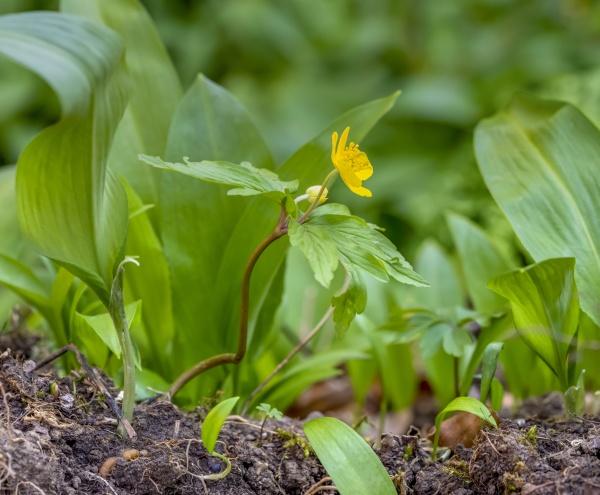 fresh spring vegetation