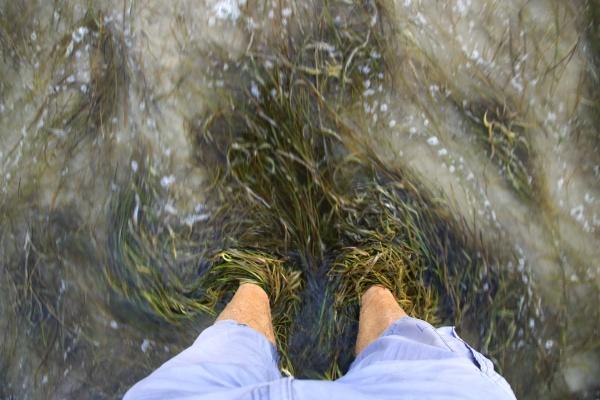 waves and seaweed wash around feet
