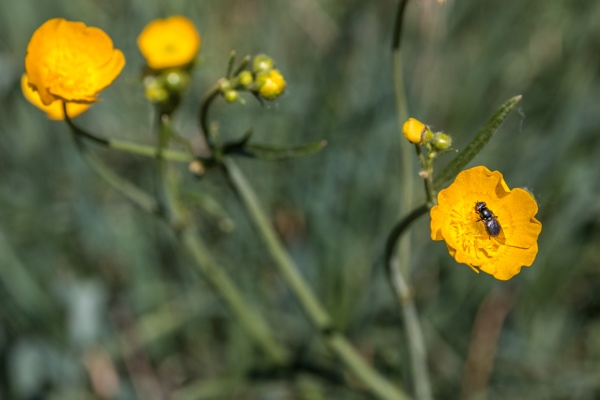 little fly on a yellow flower