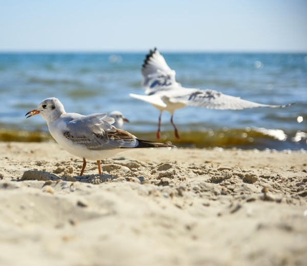 seagulls on the sandy shore of