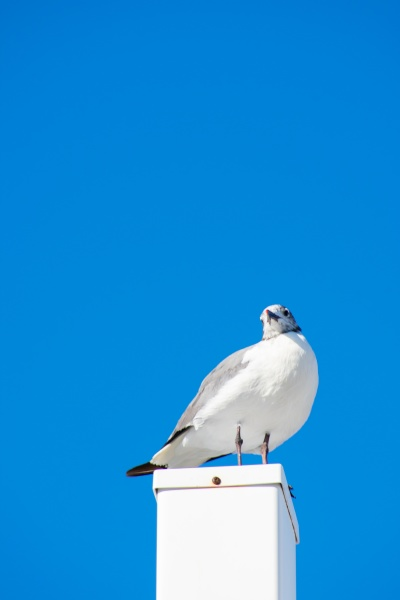 a seagull standing on a white
