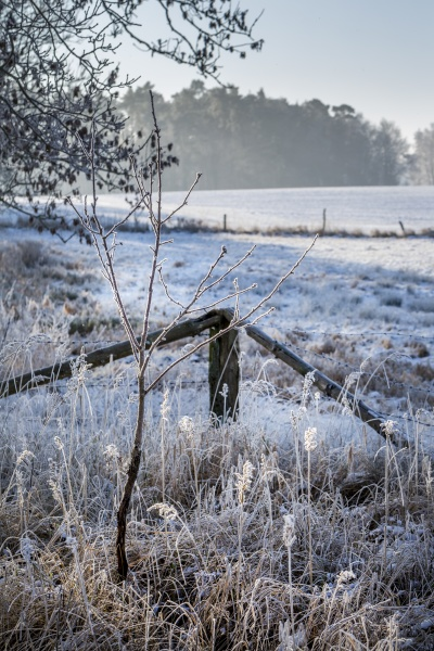 winter idyll in the north of