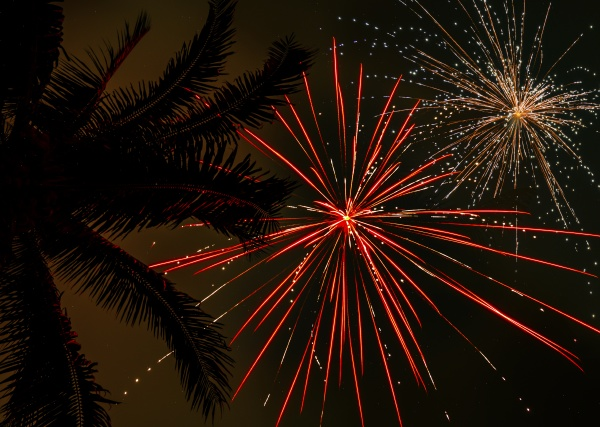 palm tree and firework display
