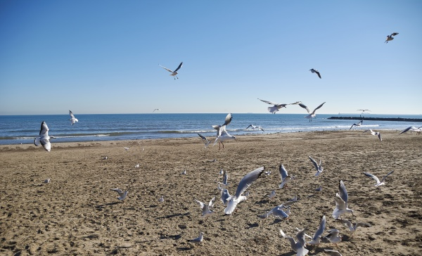 set of seagulls flying on the