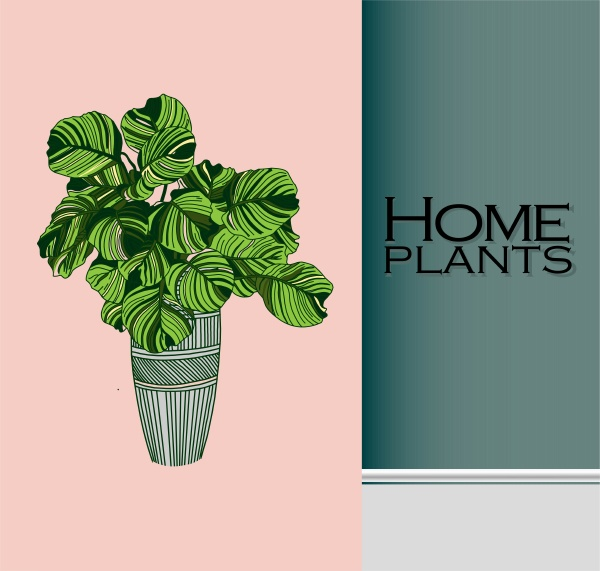 modern trendy plants in the interior