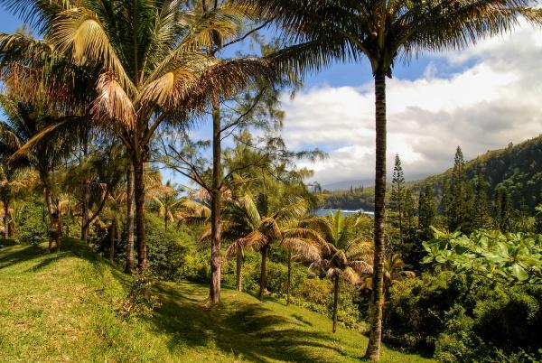 landscape of island of reunion